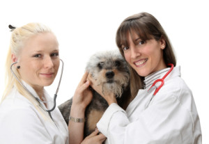 2 Female Vets and a Dog